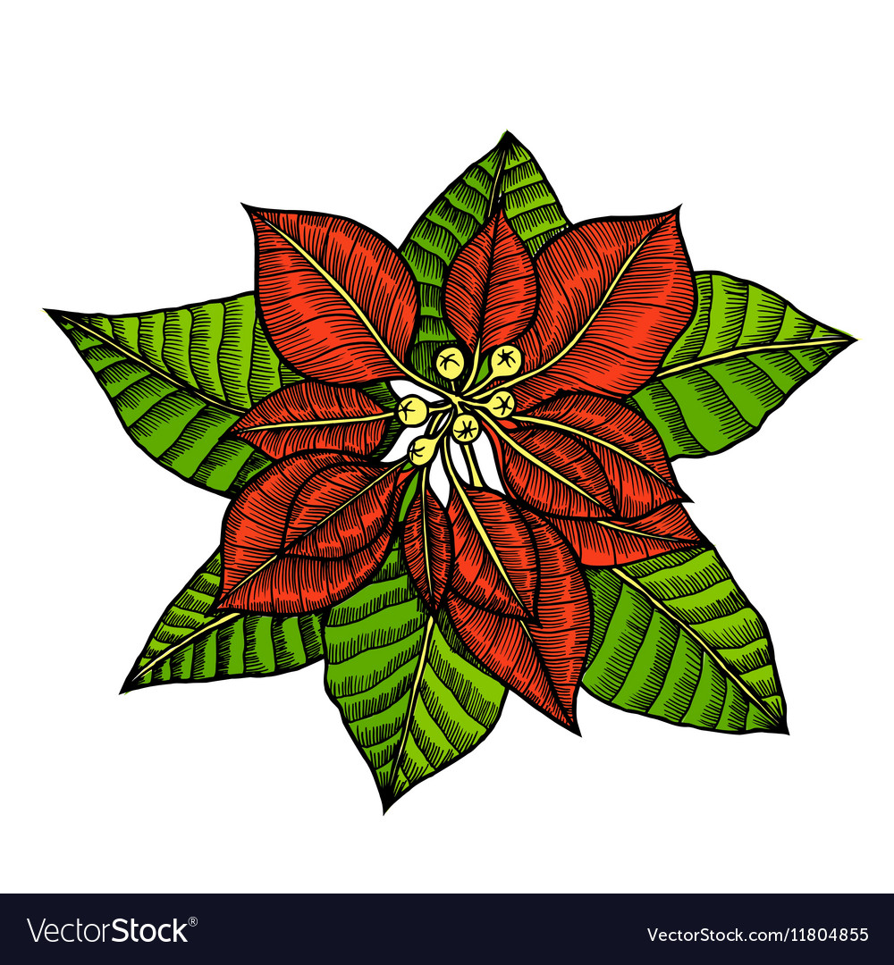 Some branches of poinsettia