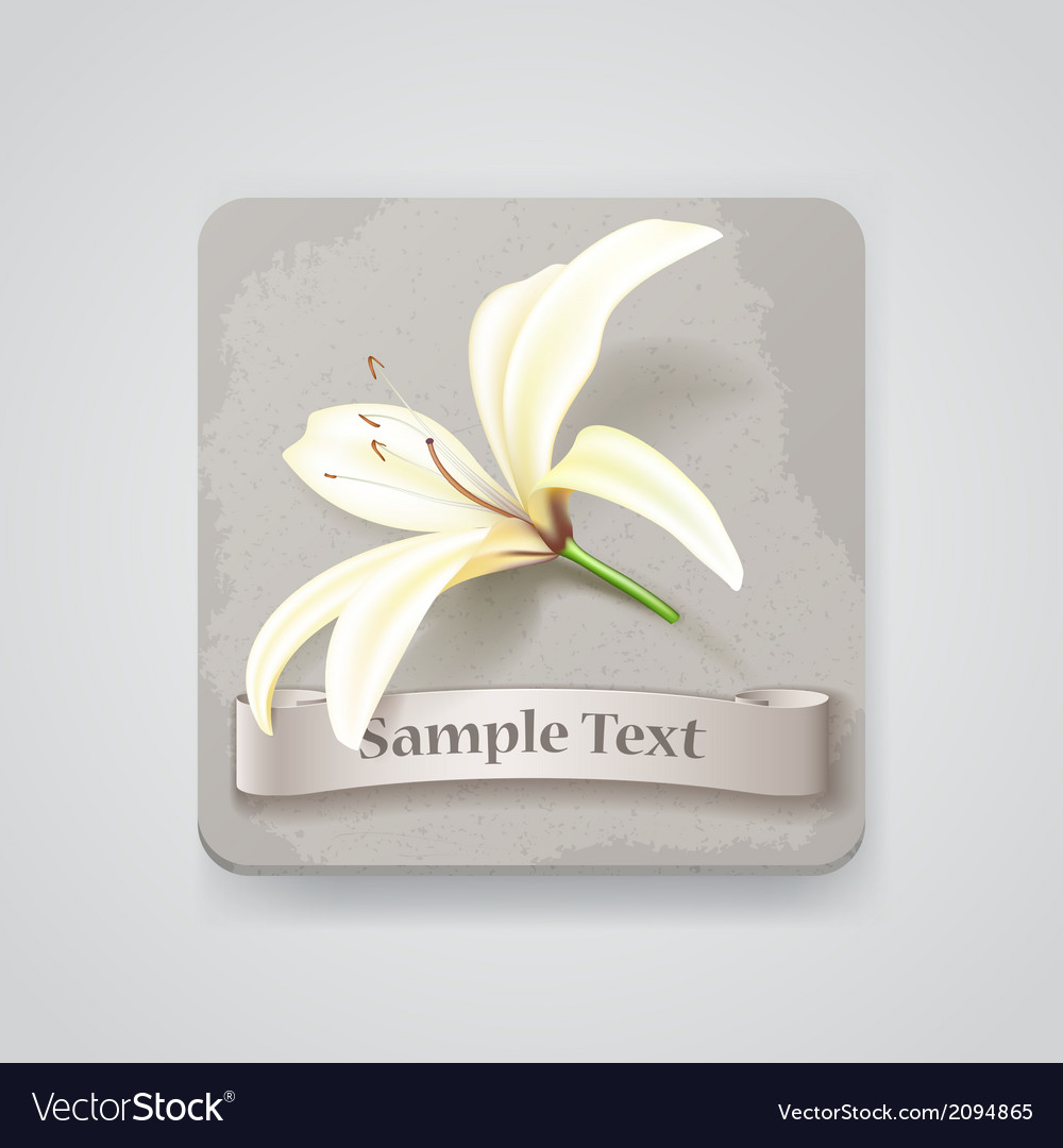 Realistic lily flower icon vector image