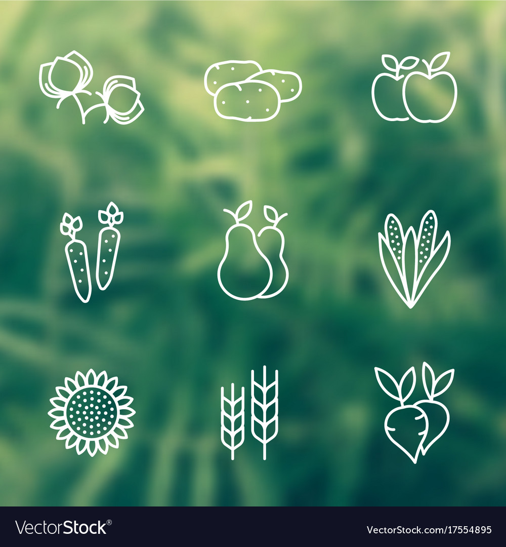 Harvest line icons vector image