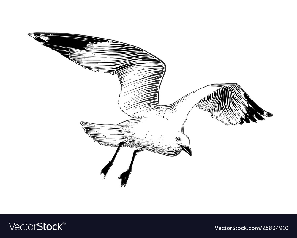 Hand drawn sketch seagull in black color