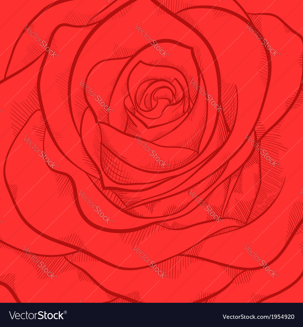 Beautiful background with red rose close-up