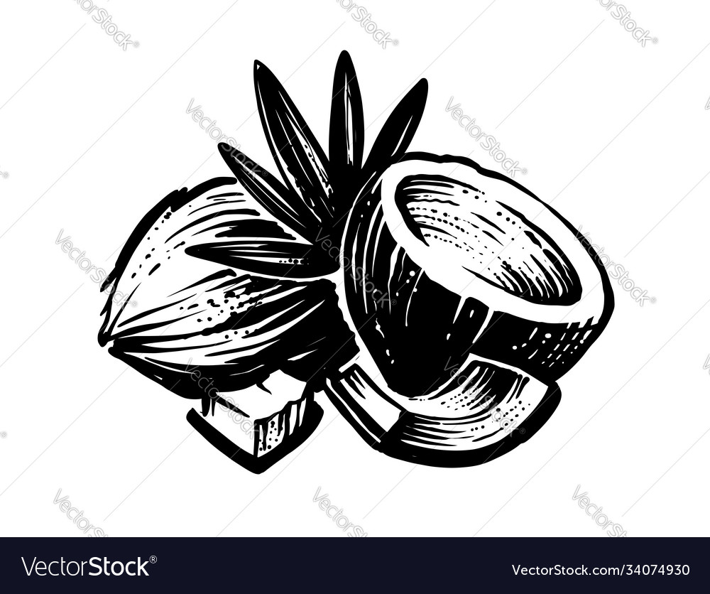 Black coconut sketch with palm leaf on white