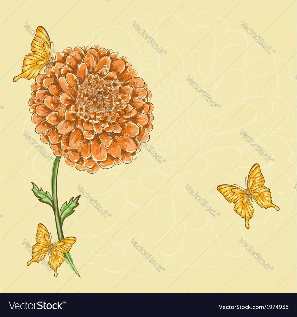 Chrysanthemum flower with flying butterflies