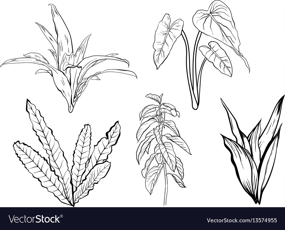 How To Draw A Jungle Tree Step By Step Motif tropical tropical leaves tropical plants tropical pattern tropical decor tropical design tropical garden tropical interior tropical birds. the drawing blogger