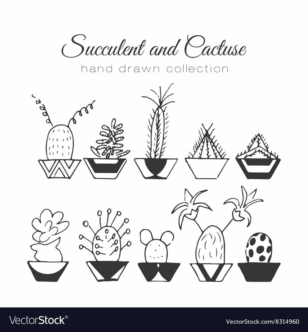 Cactus succulent and cacti