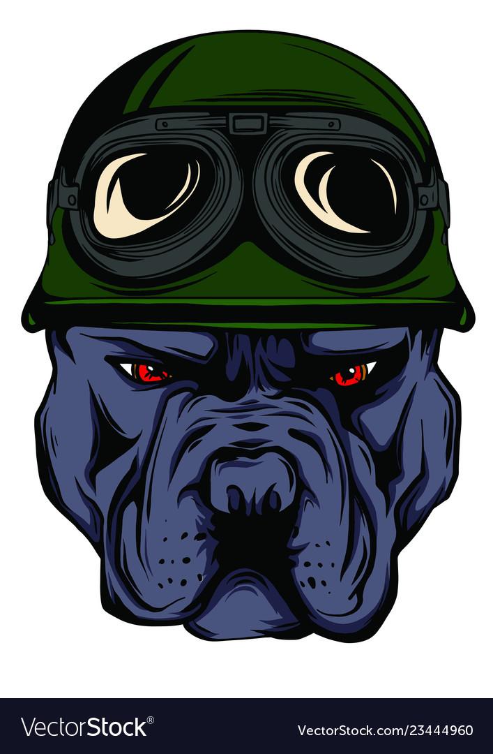 Face bulldog biker with helmet