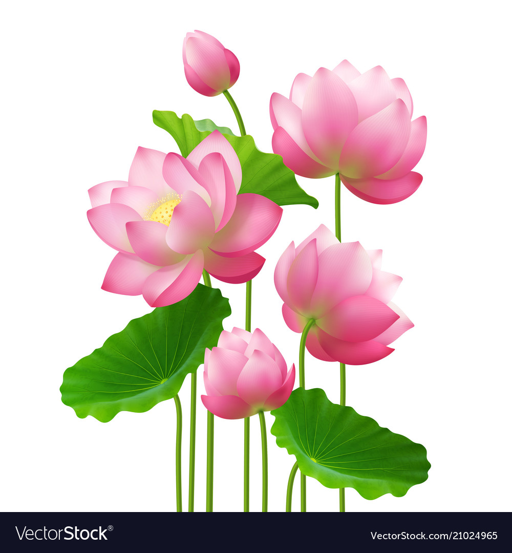 Realistic Bunch Lotus Flowers Royalty Free Vector Image