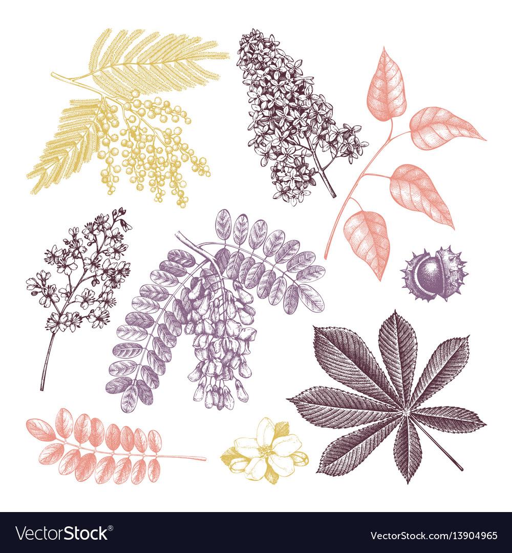 Vintage blooming trees sketch set vector image