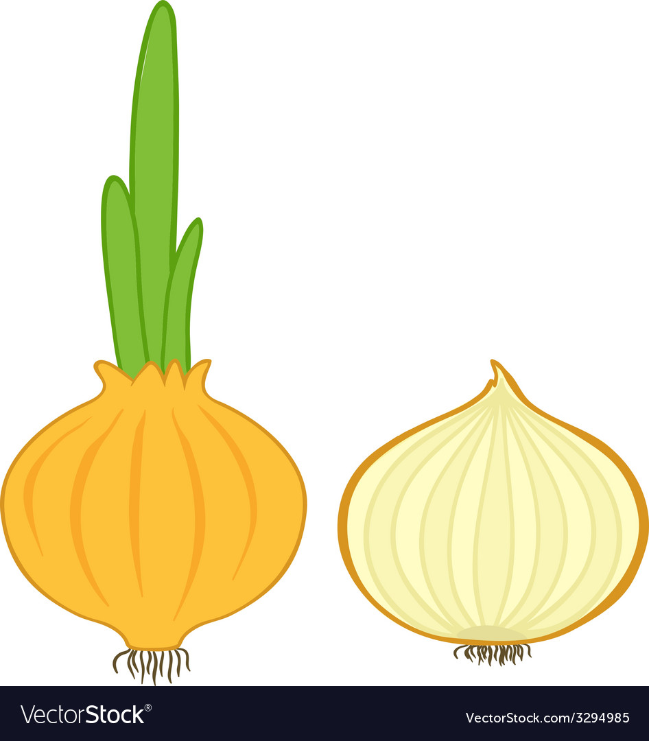 Onion and slice