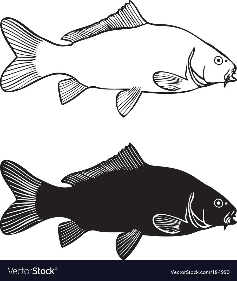 common carp drawings. Carp Drawing Vector