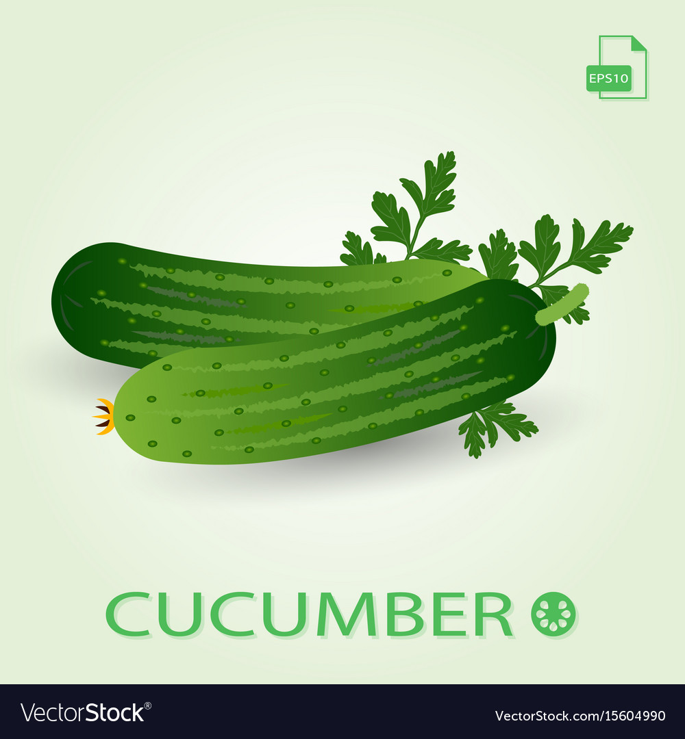 Two fresh ripe cucumbers with leaves