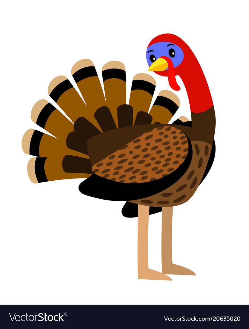 Turkey thanksgiving traditional turkey