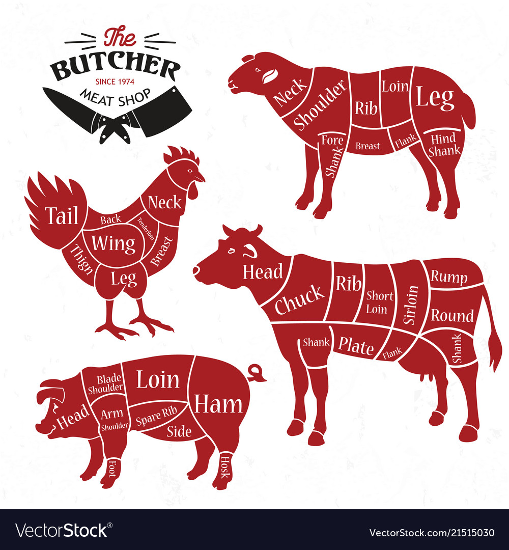 meat cuts diagrams for butcher shop animal vector 21515030 meat cuts diagrams for butcher shop animal vector image