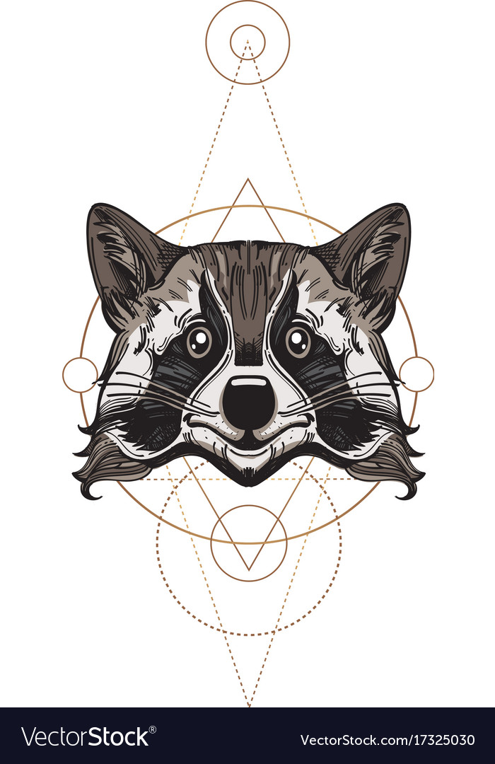 Muzzle raccoon for creating sketches of tattoos