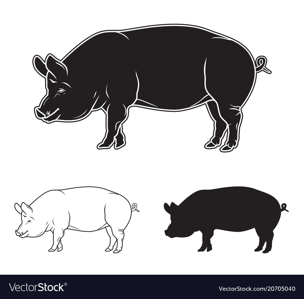 Hand drawn pig set vector image
