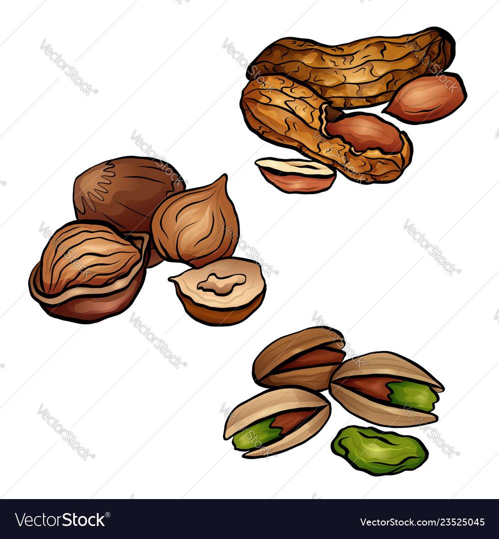 Set of colored cartoon nuts peanuts hazelnut