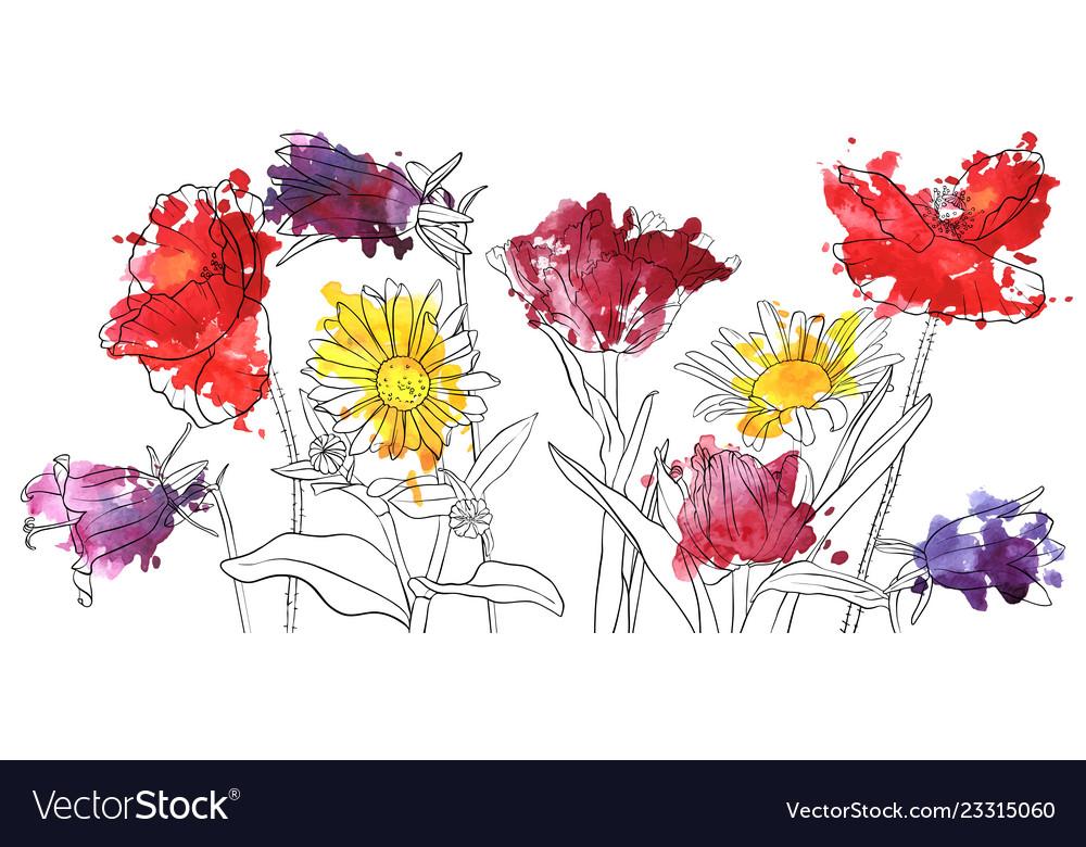 Drawing poppy flowers