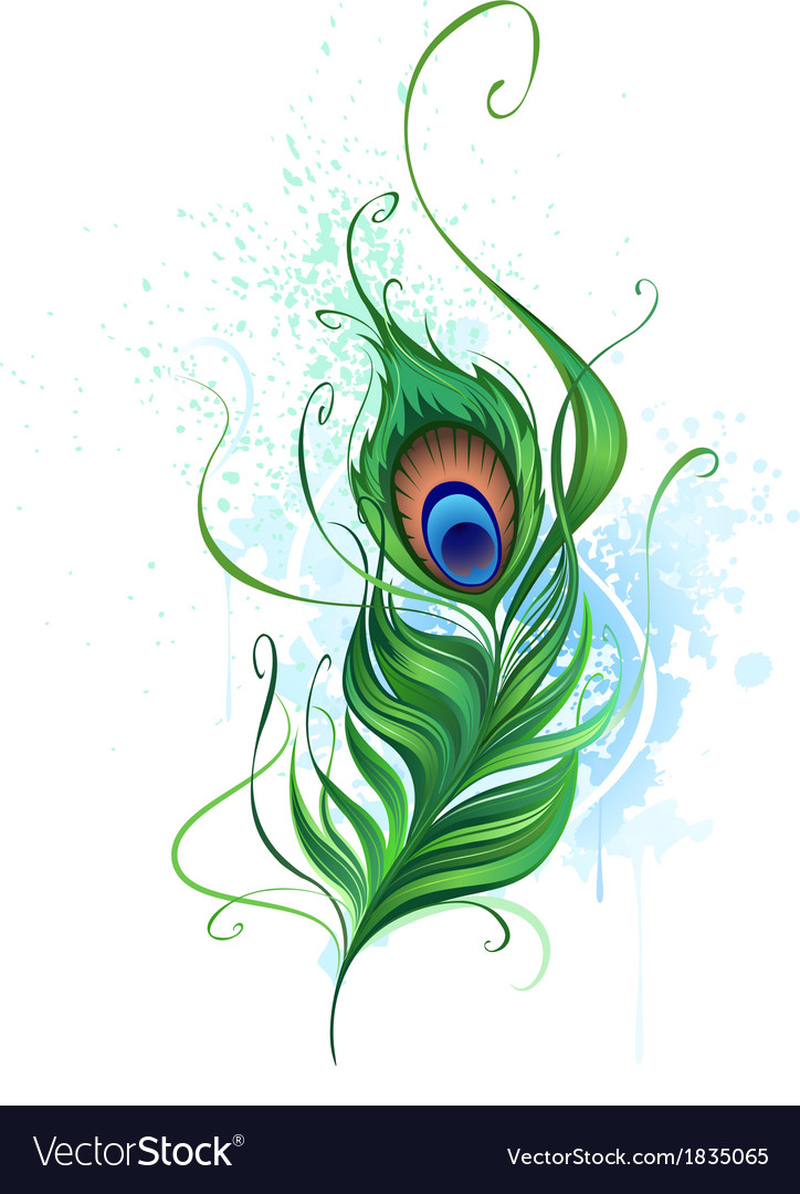 peacock feather royalty free vector image