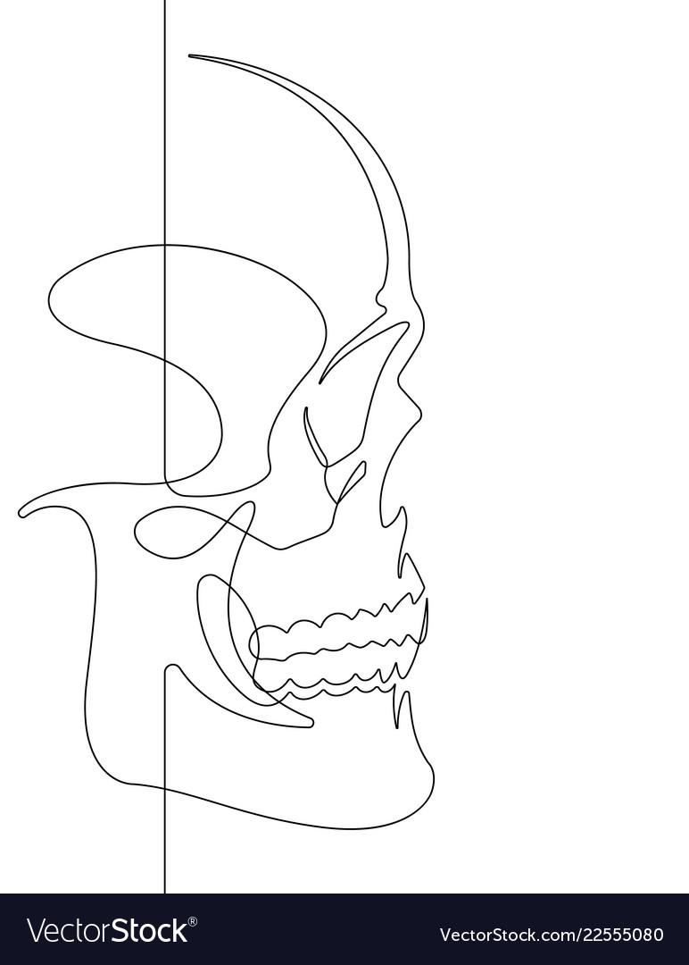 Human skull continuous line art