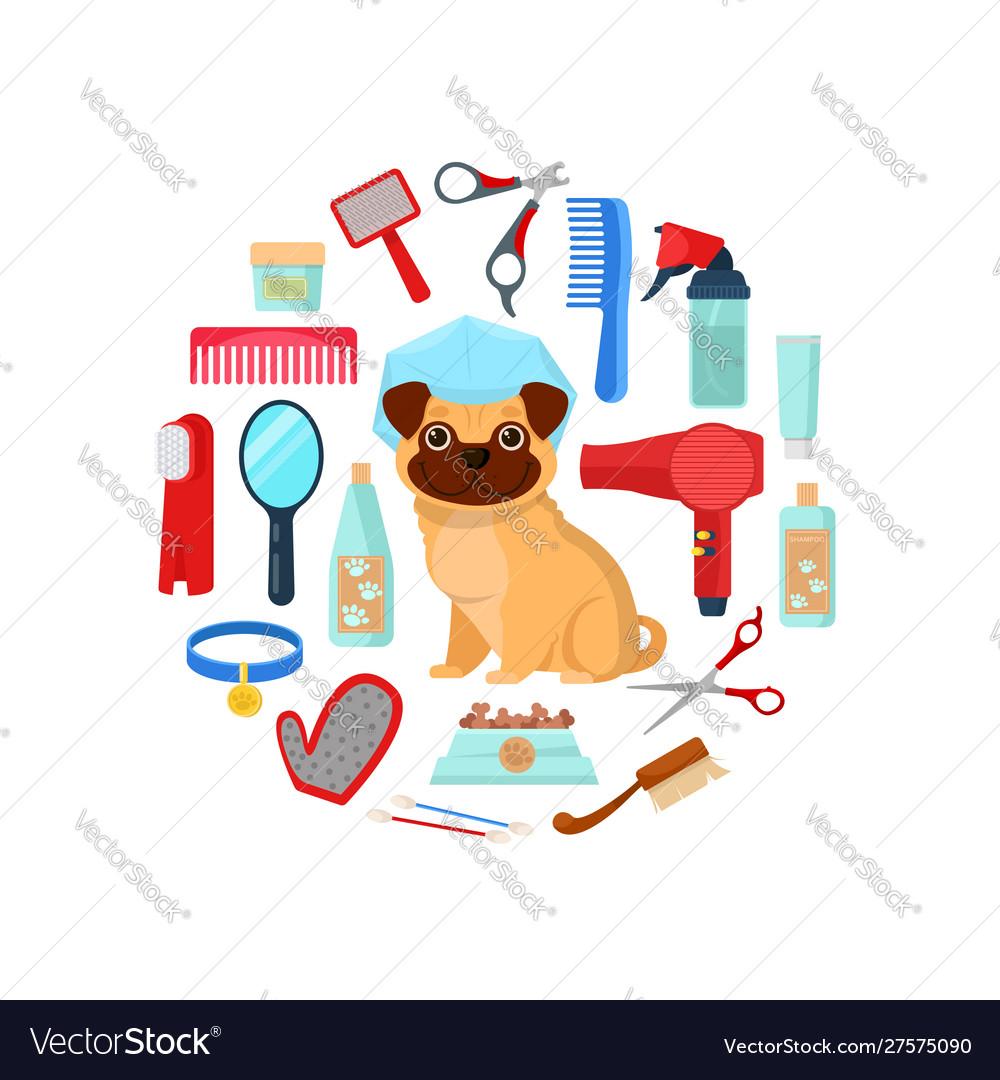 Modern dog grooming & farm เปิดจองลูกแจ็ค รัสเซลล์ เทอร์เรีย.