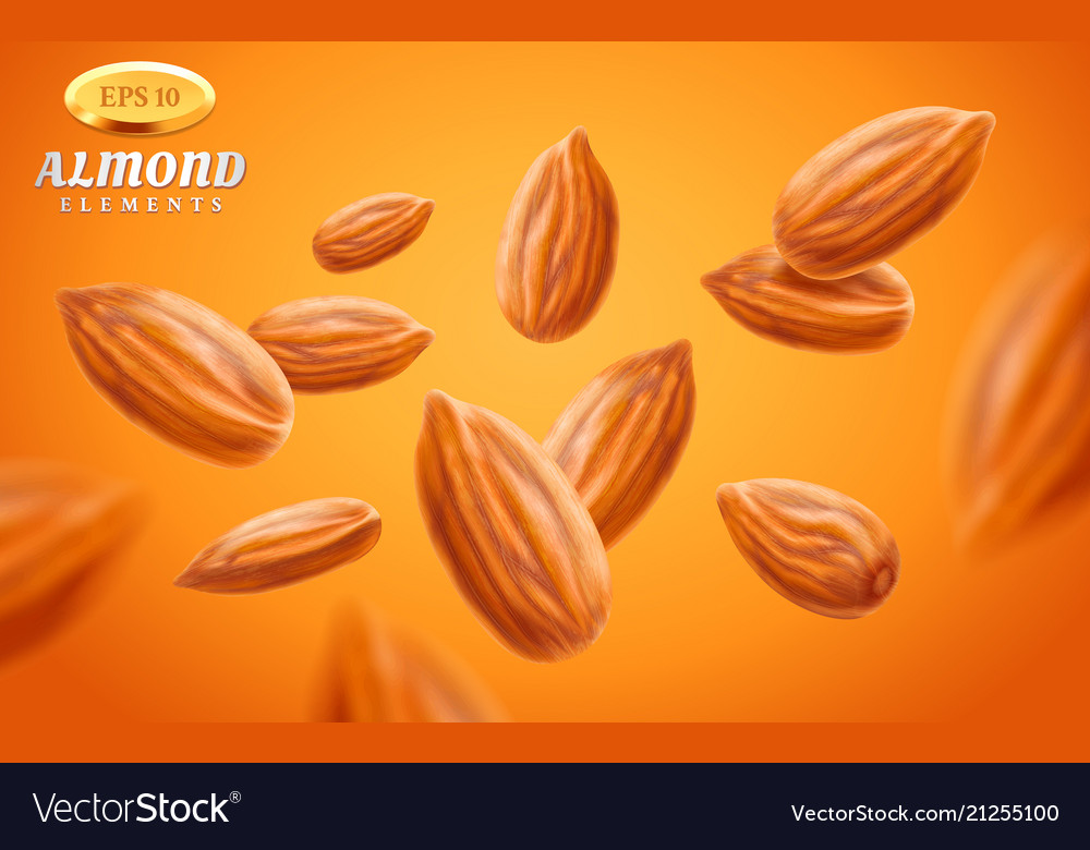 Almond set detailed realistic kernels