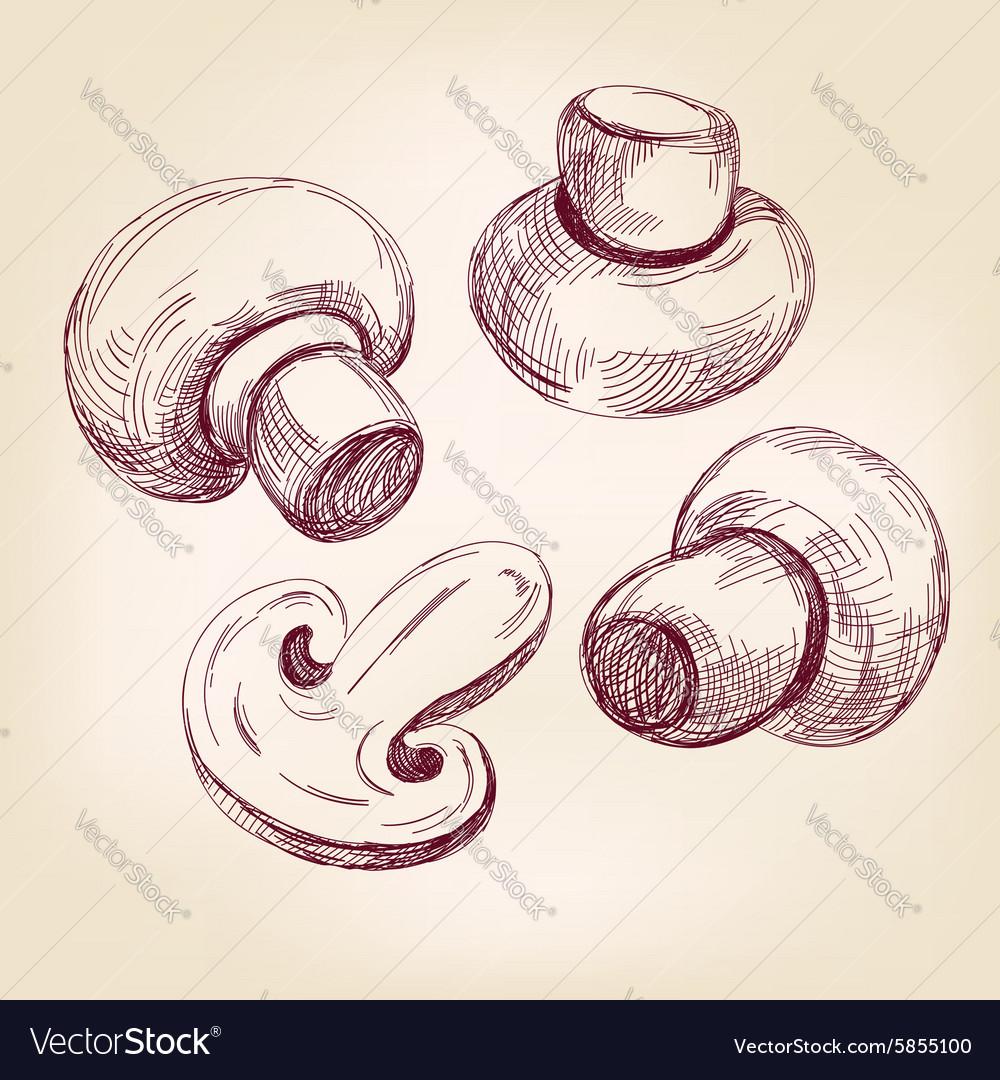 Mushroom set hand drawn llustration vector image