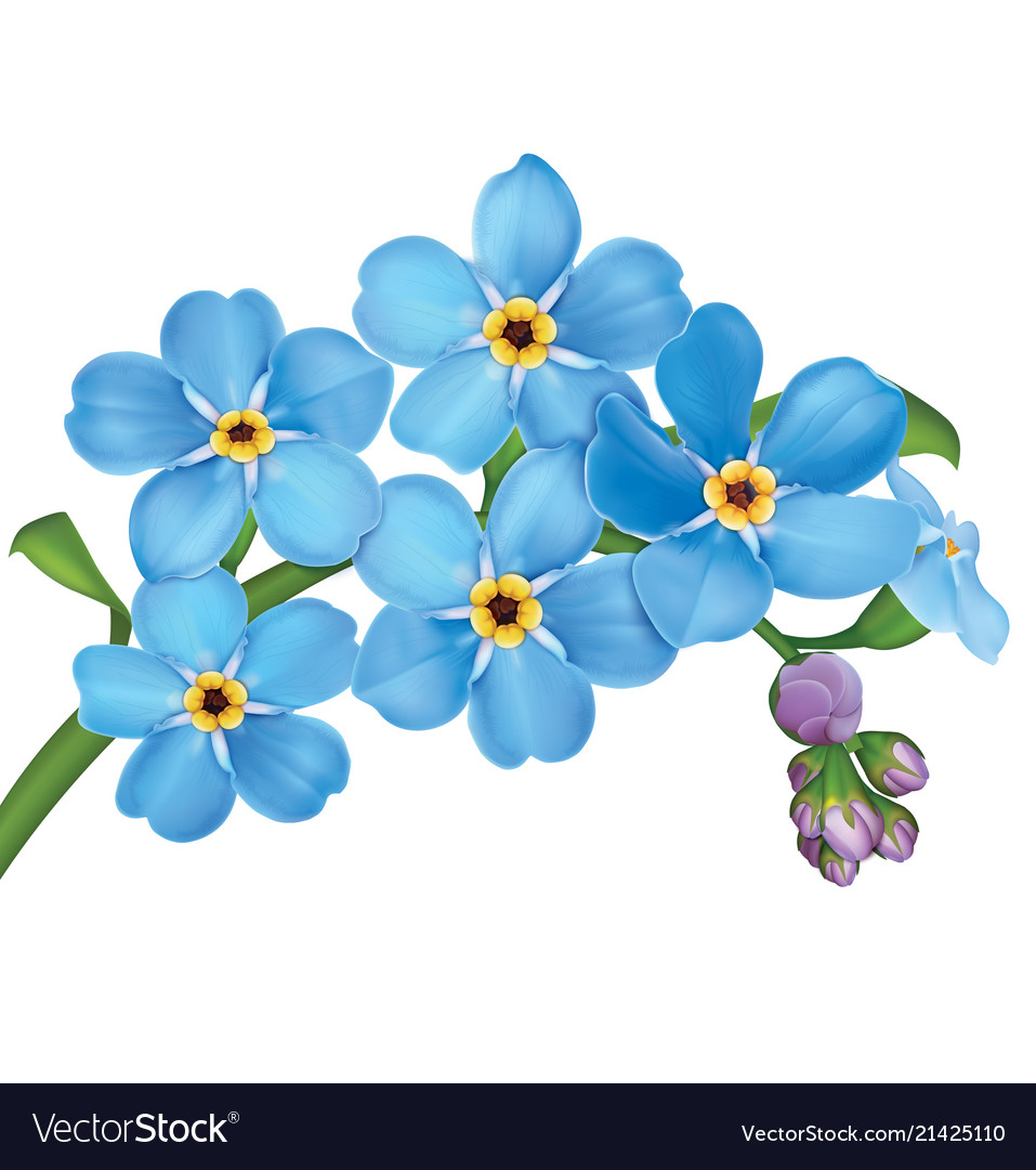 Bunch of blue forget me not flowers with leaves