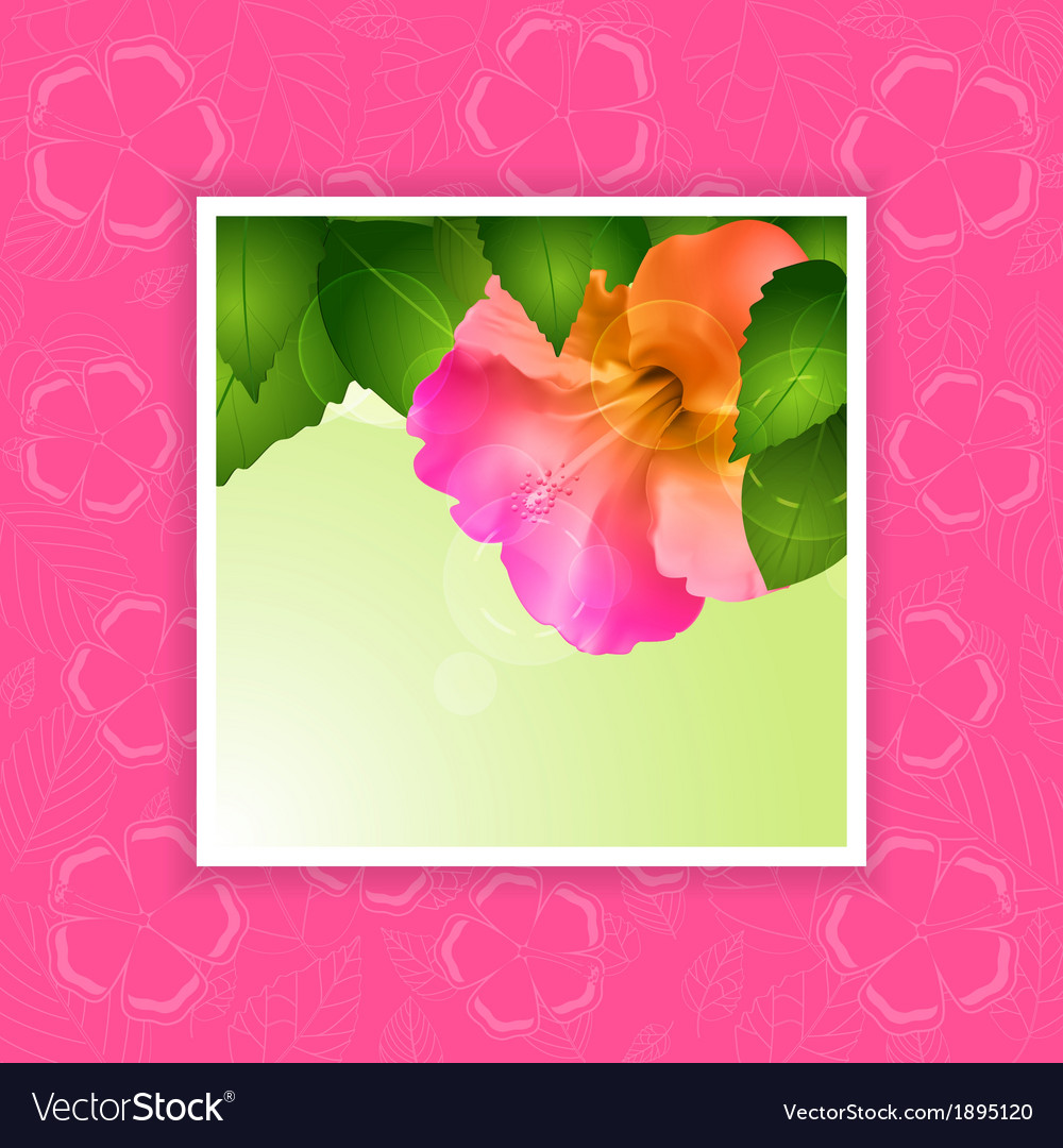 Hibiscus Flower Border On Pink Royalty Free Vector Image