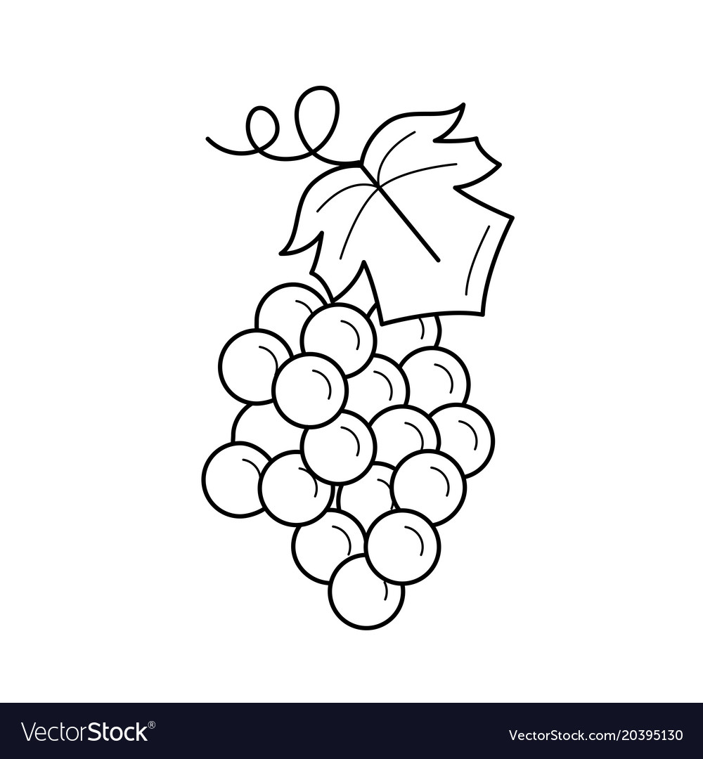 Bunch of grapes line icon Royalty Free Vector Image