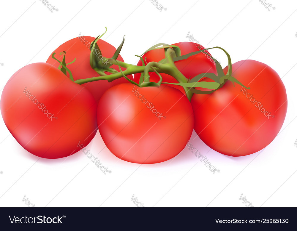 Set red tomatoes on a white background