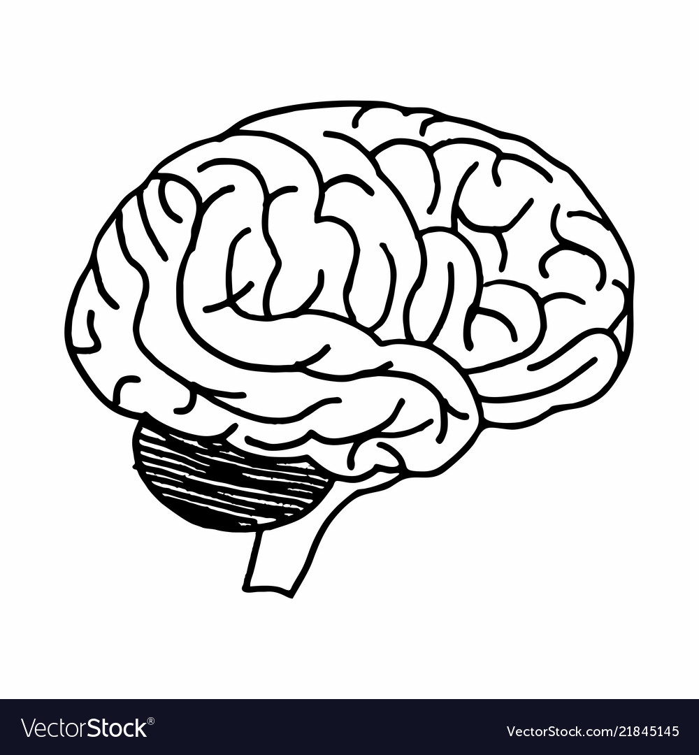 Brain freehand