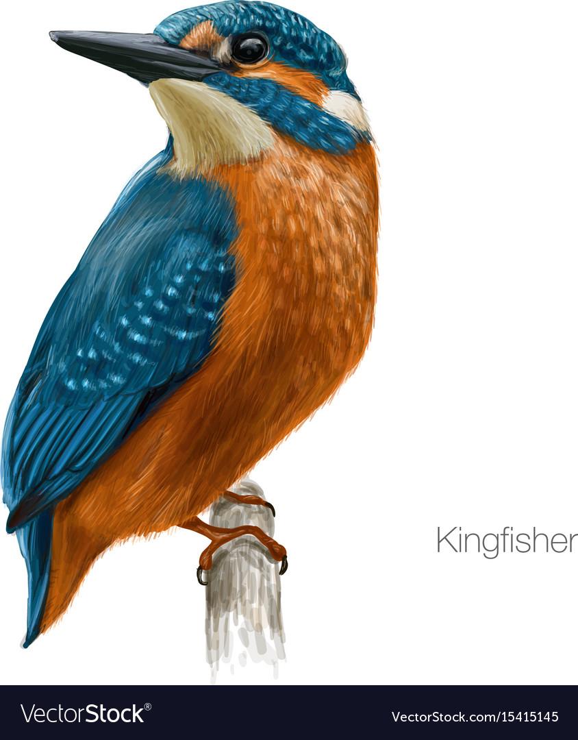 Kingfisher hand drawn vector image