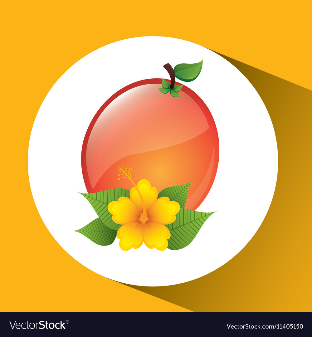 Fruit apricot flower yellow graphic