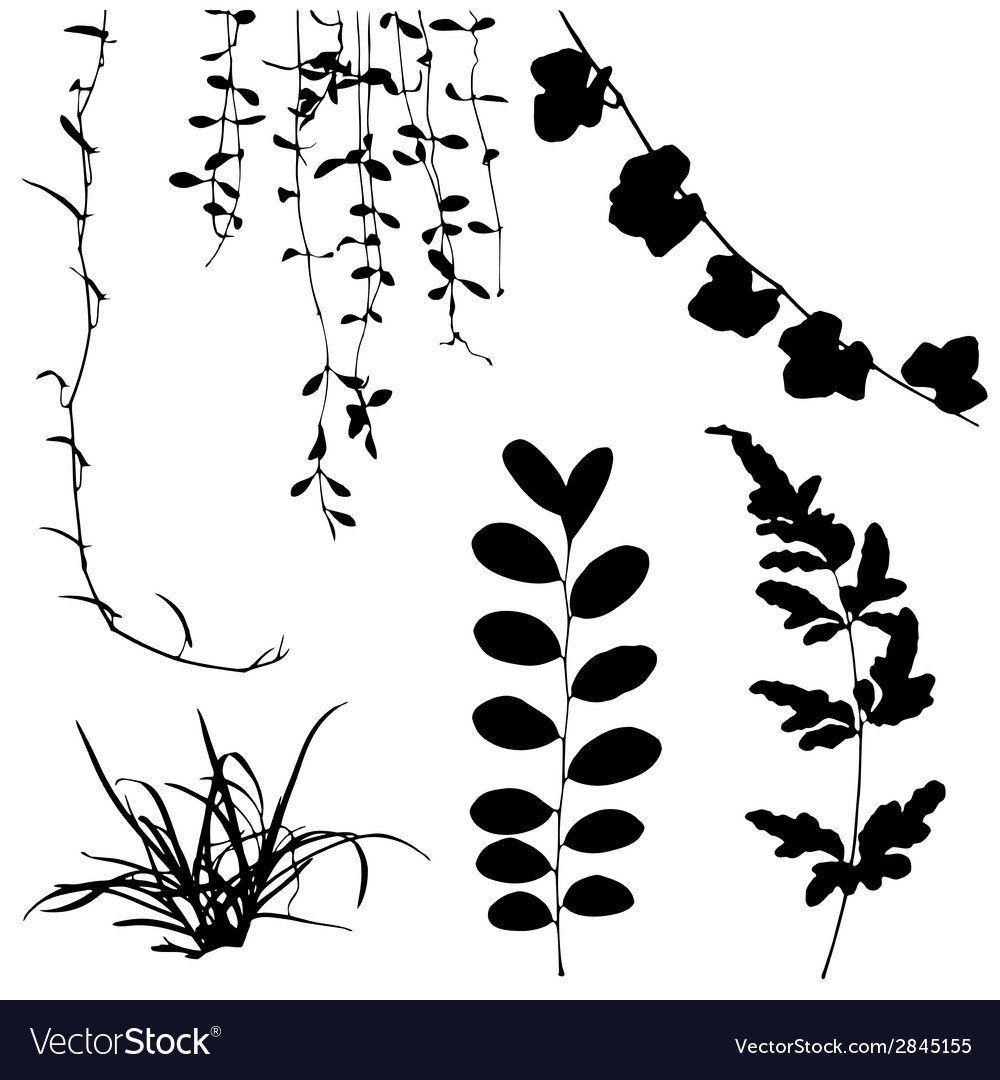 silhouettes of leaf and vine plant royalty free vector image rh vectorstock com vine leaf vector free grape vine vector free download
