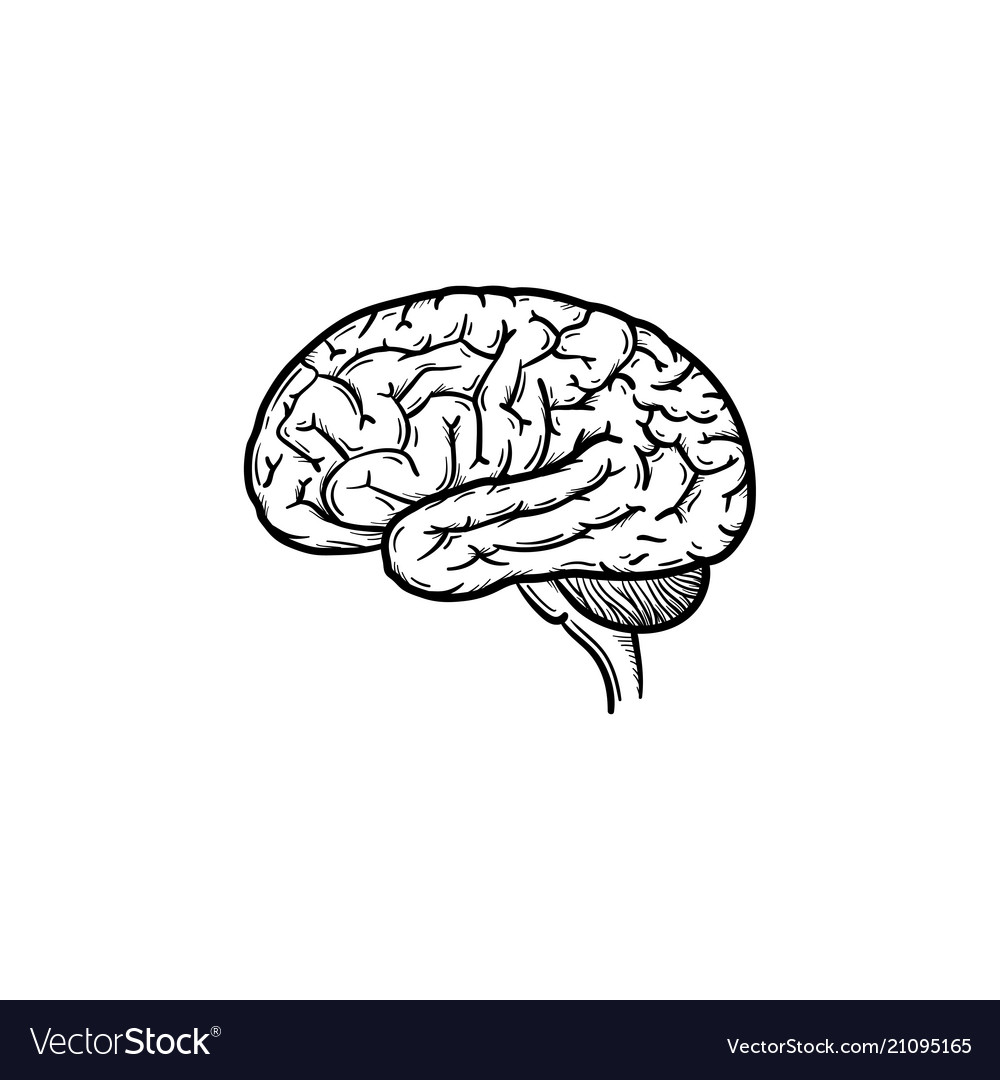 Human brain hand drawn outline doodle icon vector image