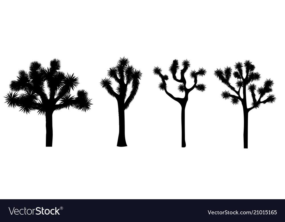 Joshua tree collection