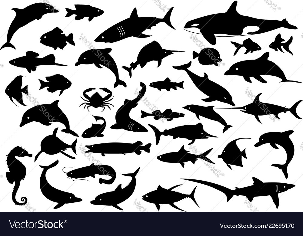 35 dolphins sharks whales and fishes