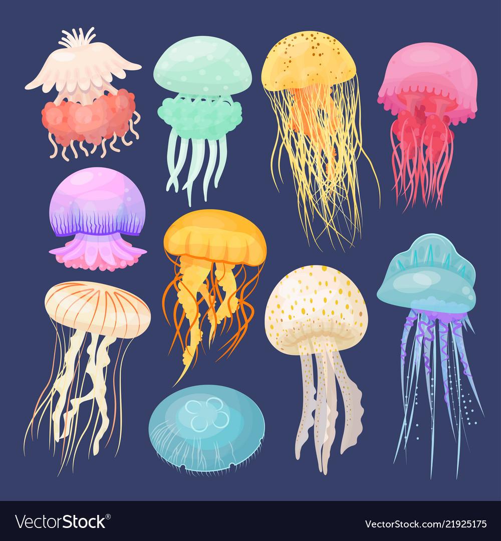 Ocean jellyfish bright set on dark blue