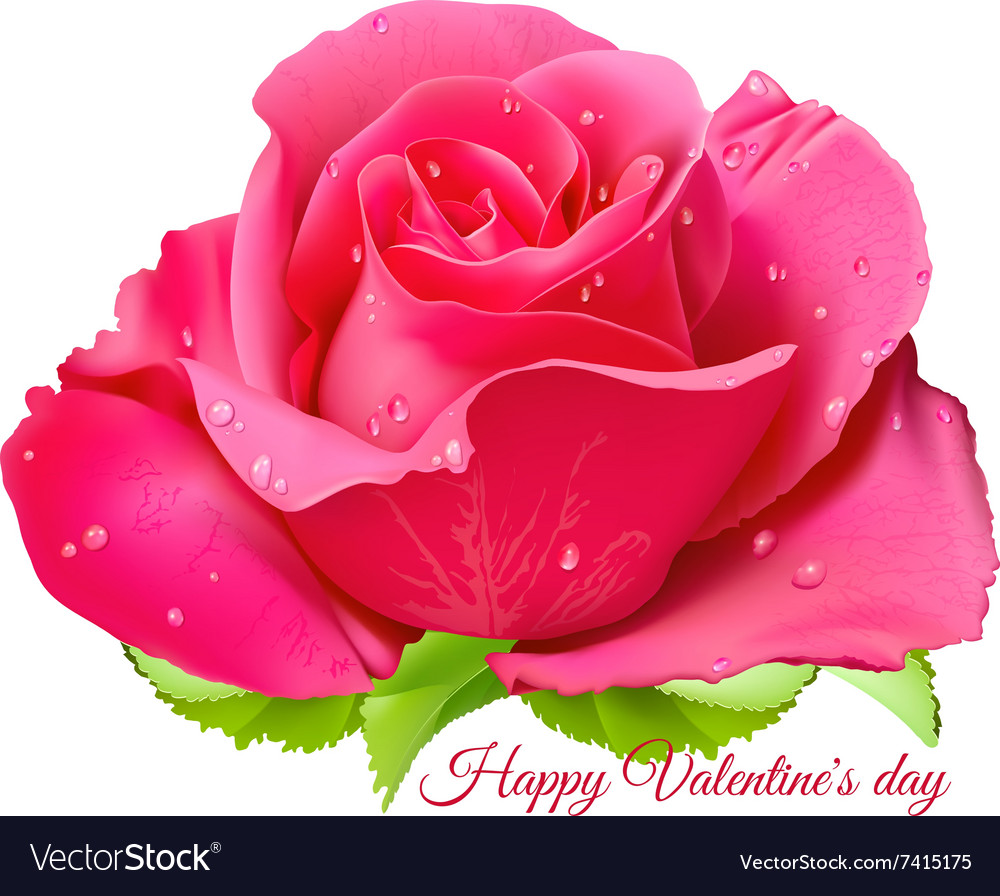 Pink Rose Happy Valentine Day Royalty Free Vector Image