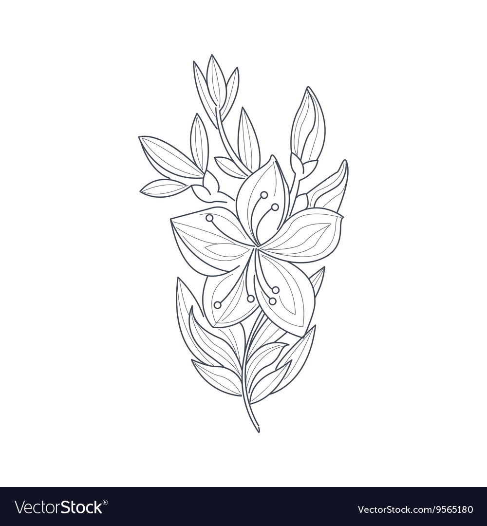 Jasmine flower monochrome drawing for coloring vector image