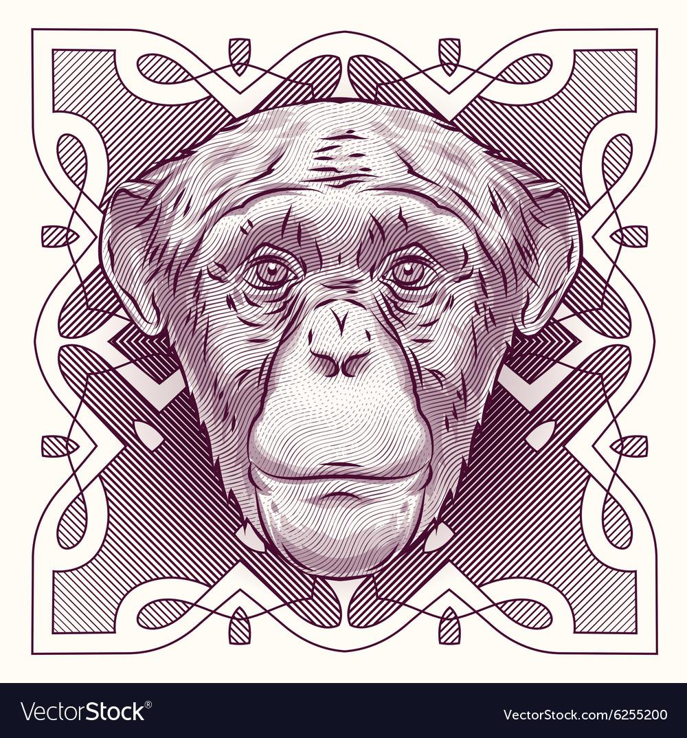 Hand drawn portrait monkey isolated