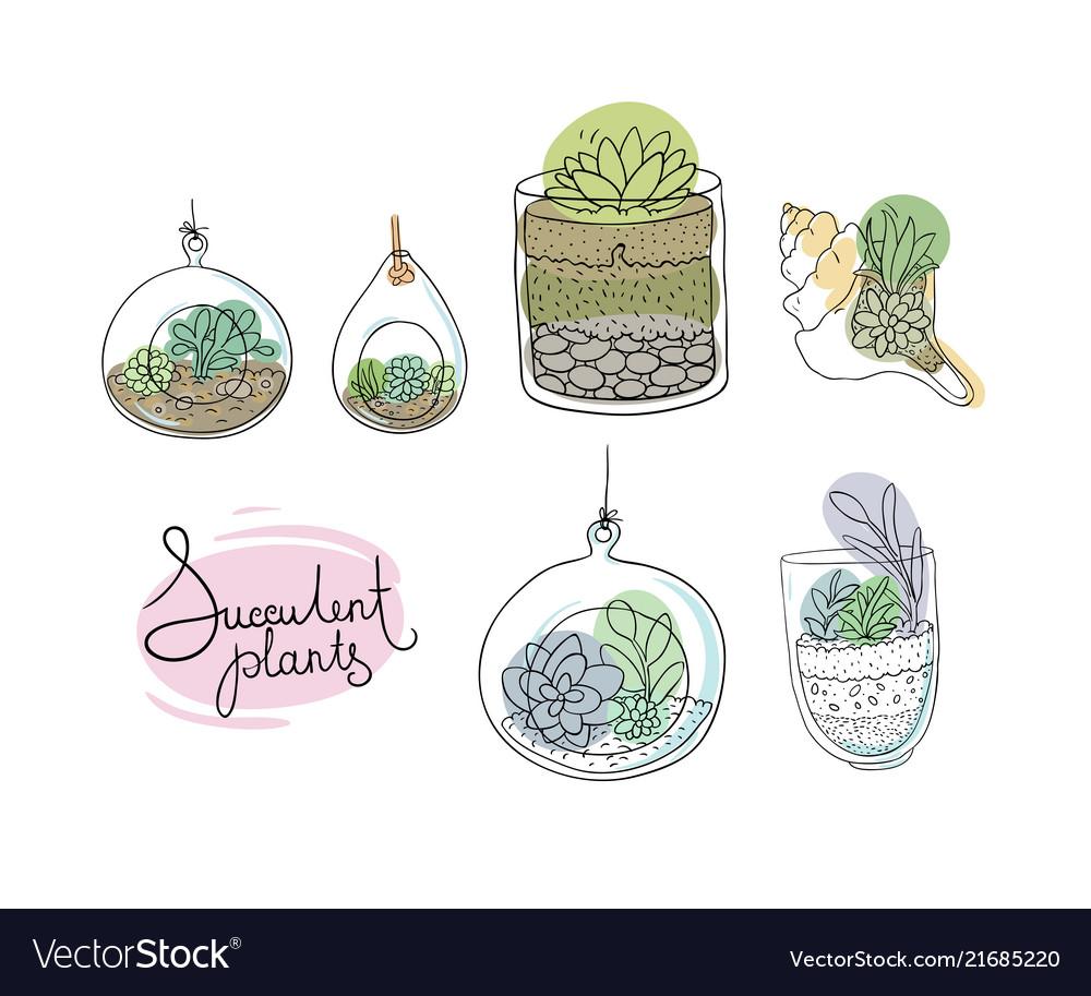 Glass terrariums with succulents set