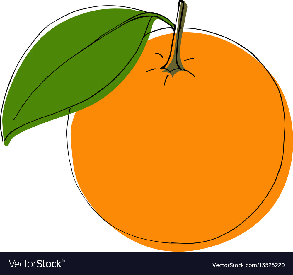Hand drawn orange fruits in vintage style vector image