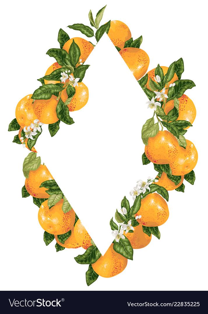 Rhombus Frame Decoration With Citrus Grapefruit Vector Image