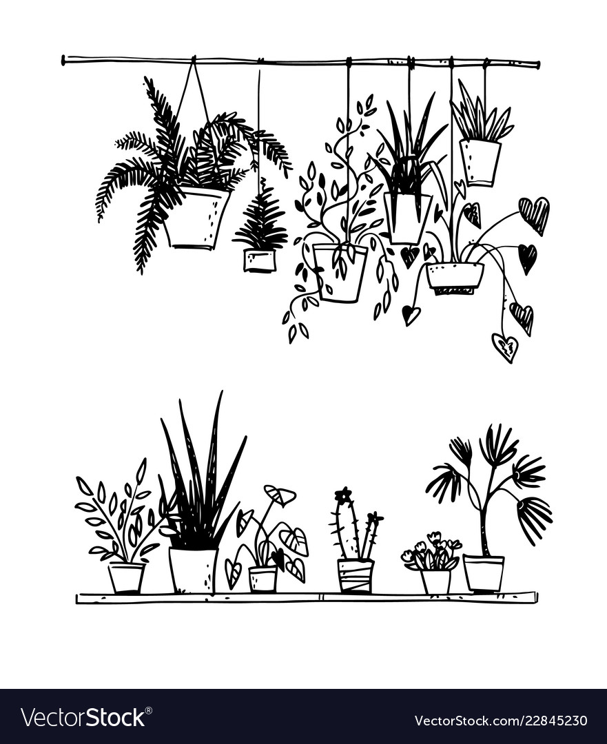 Set of potted house plants sketch