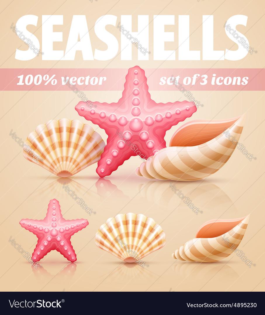 Set of summer sea shells and
