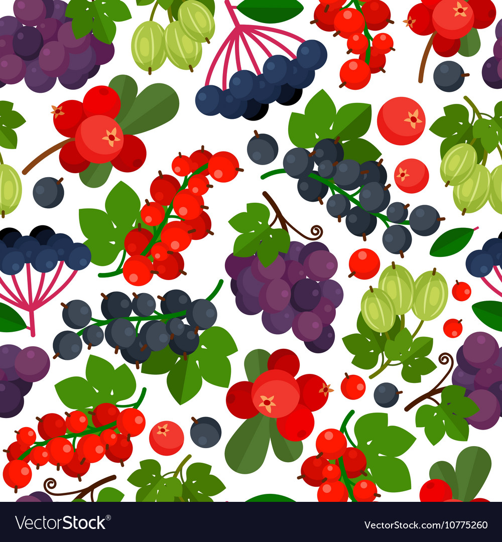 Currant Berries Pattern vector image