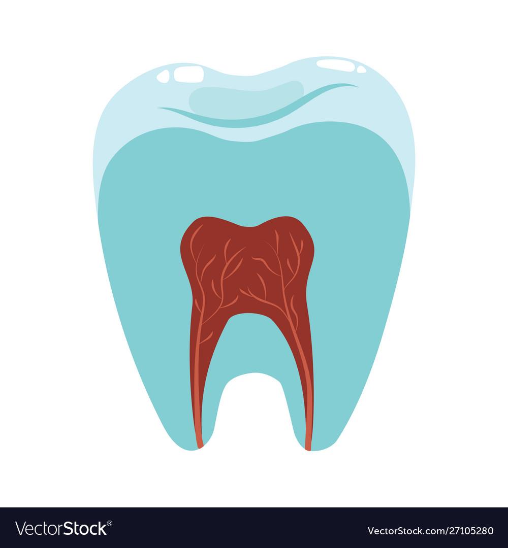 A healthy tooth in a cut hygiene oral