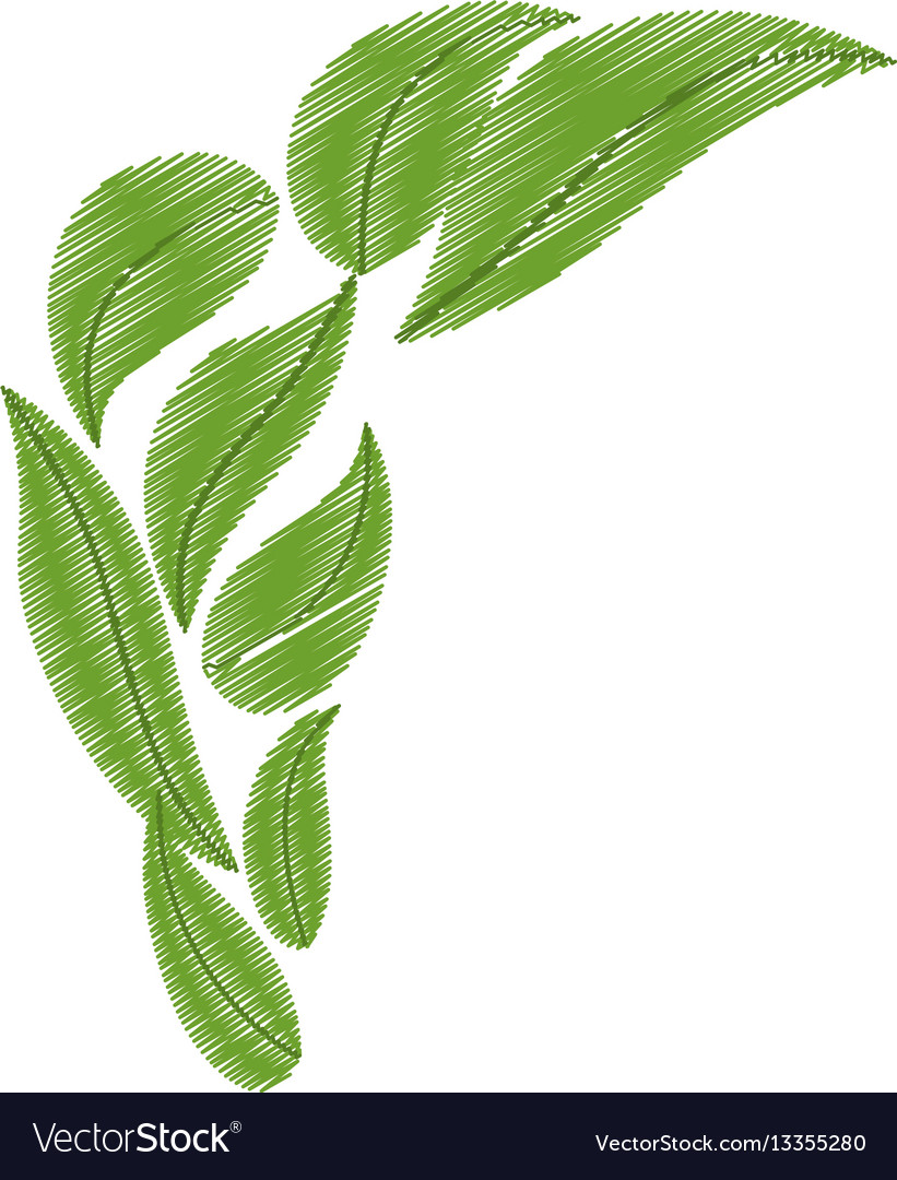 Drawing green bunch leaves natural vector image