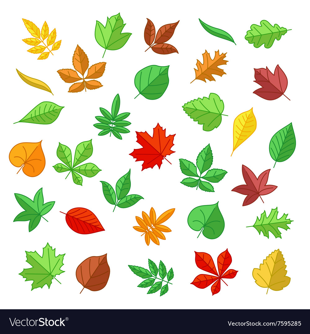 Autumn and summer leaves in flat style vector image